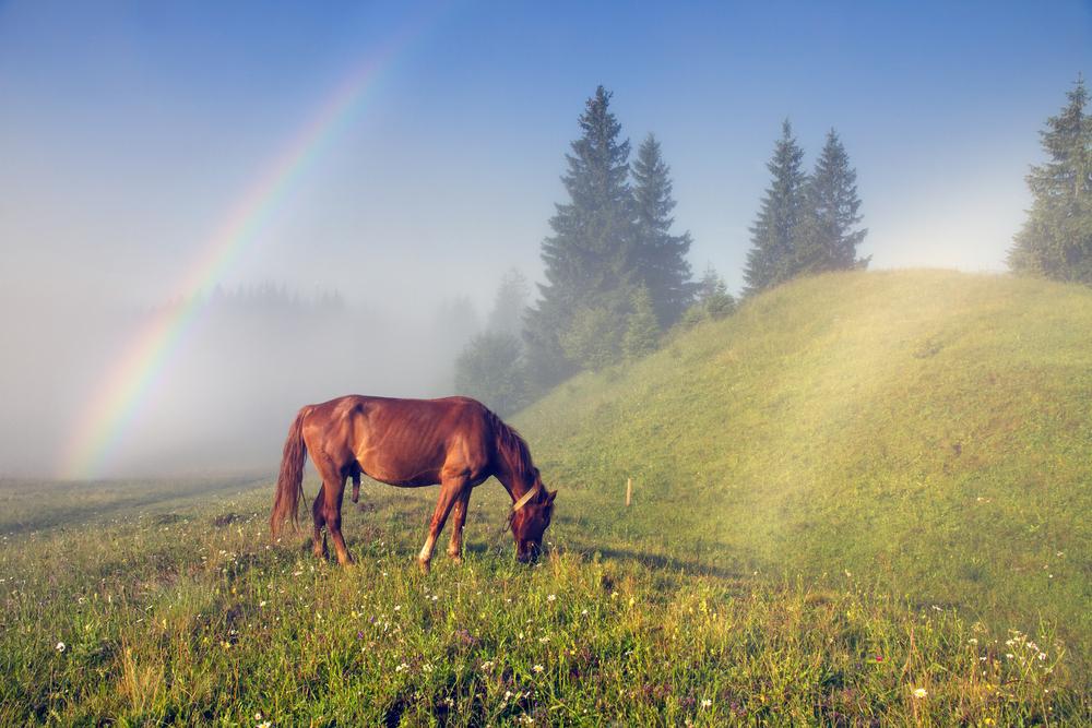 Zo fotografeer je een regenboog